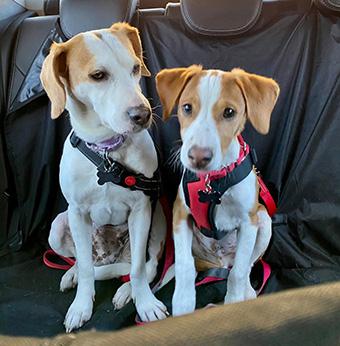 Canine Rescue a Resounding Success